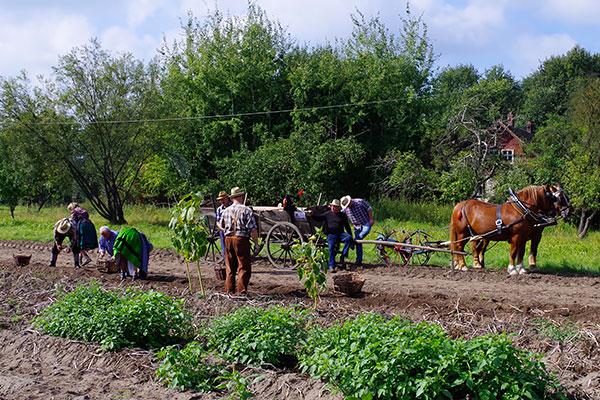Kartoffelhacken im Spreewald